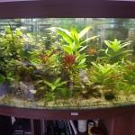 Aquascaping 450 Liter Design 8